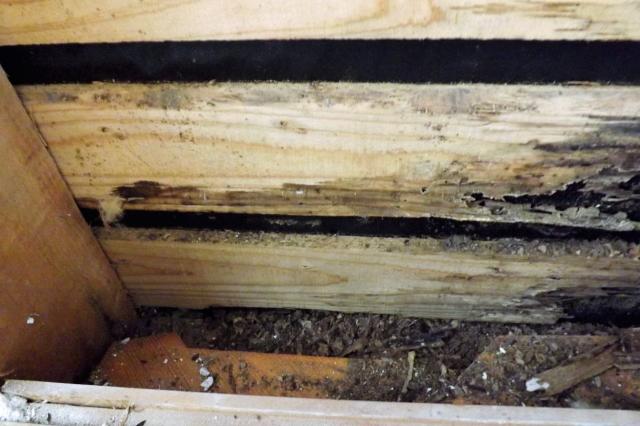 害獣による糞尿被害で木が腐食|長年の糞尿被害によって、木が腐り柱や土台に大きな被害がでることもあります。